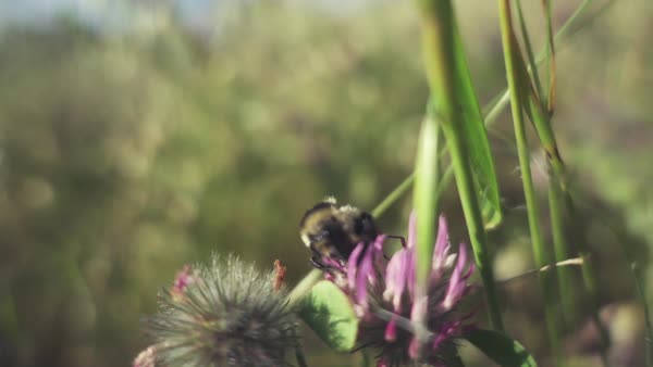 Slow motion bee in flight macro Rights-managed stock video
