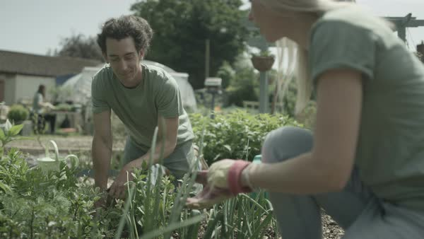 Cheerful group of volunteers working together in community garden. Royalty-free stock video