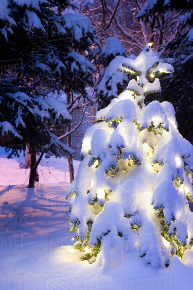 snow covered christmas tree lit with white lights outside in winter