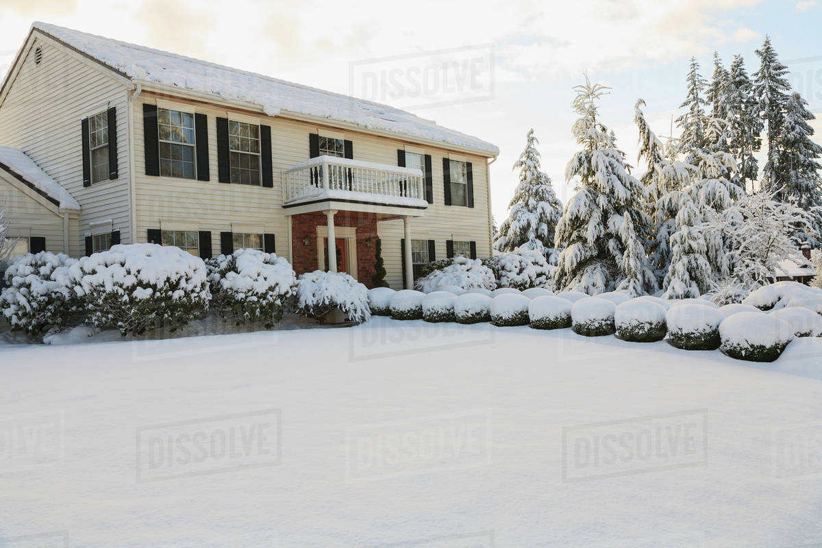 shrubs and trees covered with snow outside a house mill creek