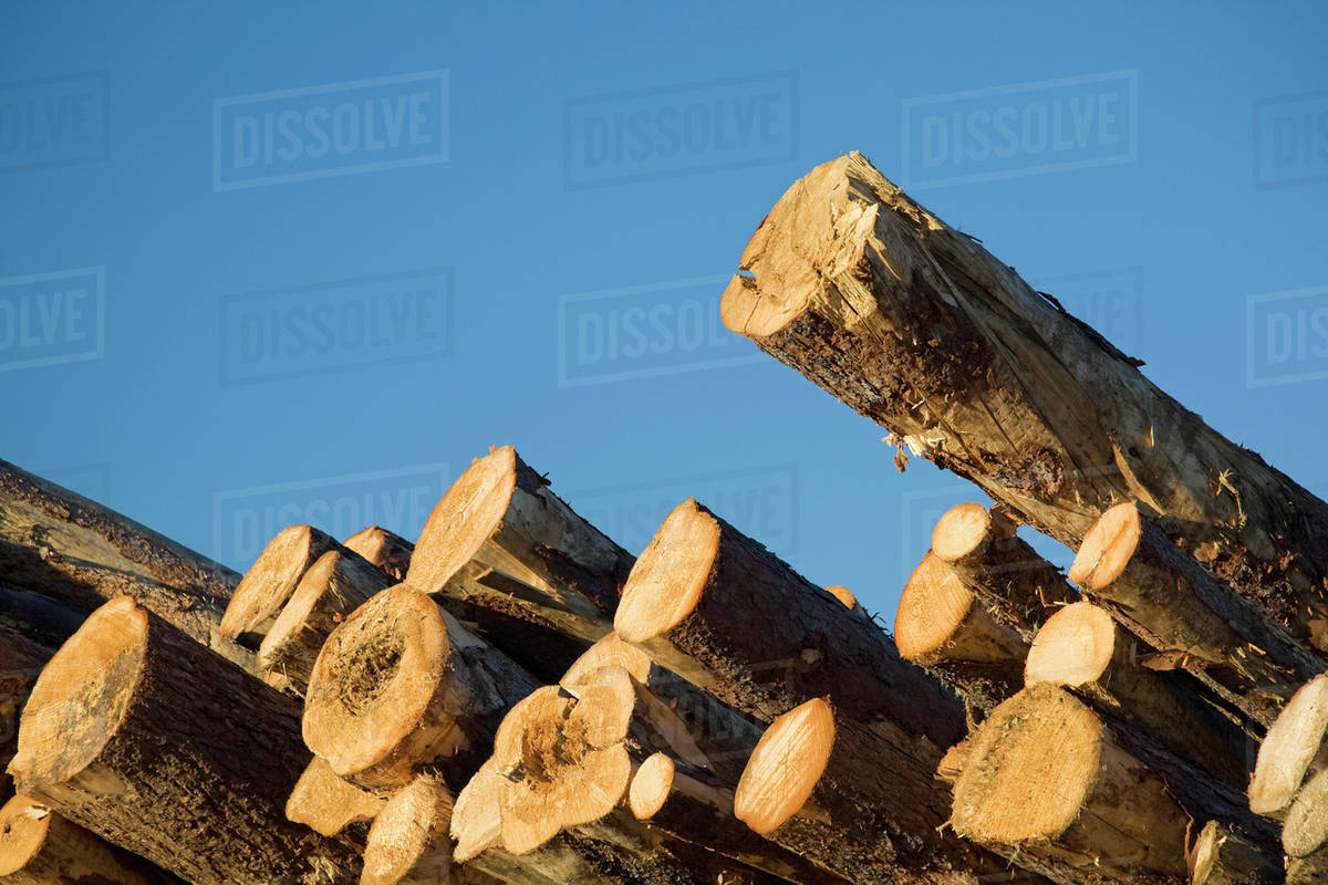 Detail Of Trees Stacked On Top Each Other In A Lumber Yard With Blue Sky Calgary Alberta Canada