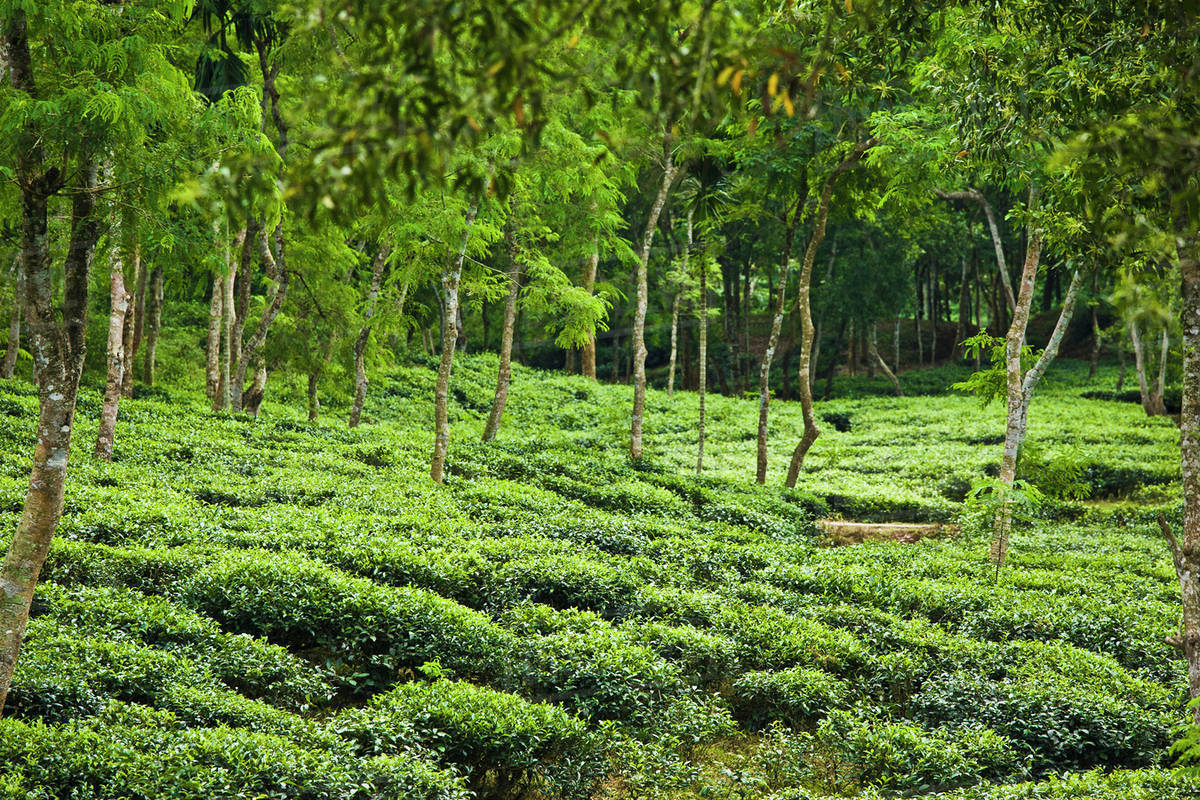 Image result for photograph of sylhet