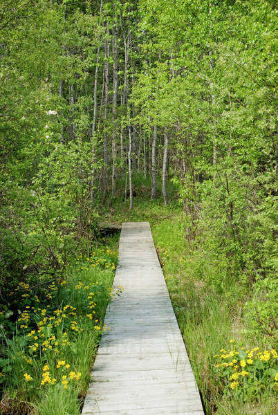 Boardwalk In The Woods Of Prince Albert National Park; Saskatchewan, Canada Royalty-free stock photo