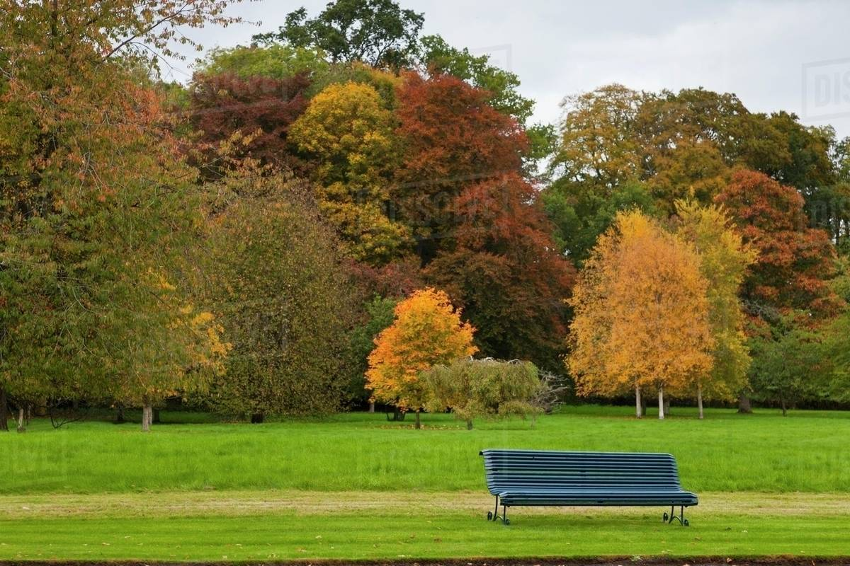 Autumn Colored Leaves On Trees And A Park Bench Scottish Borders