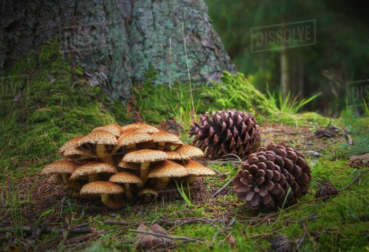 Pine Cones On The Forest Floor