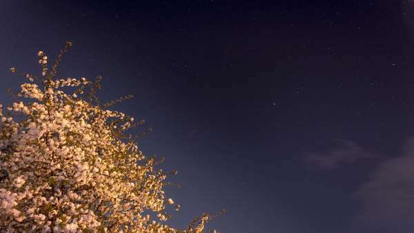 Timelapse of starry night with a shadow of a tree in foreground Royalty-free stock video