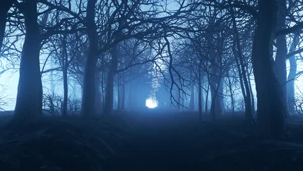 Seamless looping animation of winter  forest pathway in a fog. Royalty-free stock video