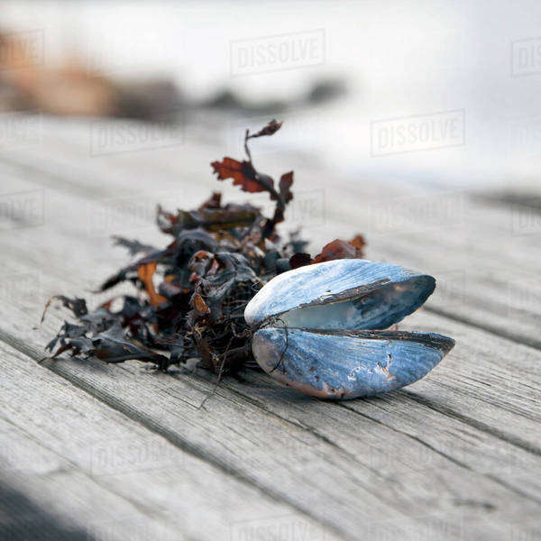 Shell and dried leaves on wood Royalty-free stock photo