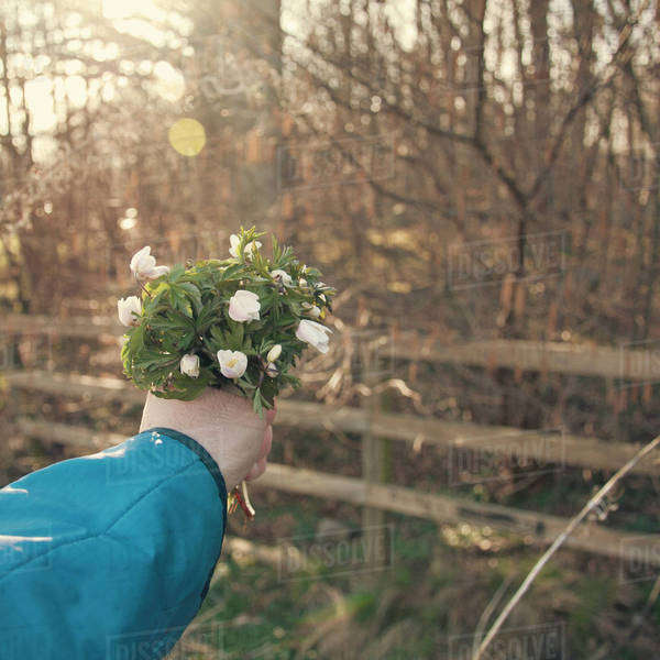 Close-up of human hand holding bouquet of flowers with bare trees in the background Royalty-free stock photo