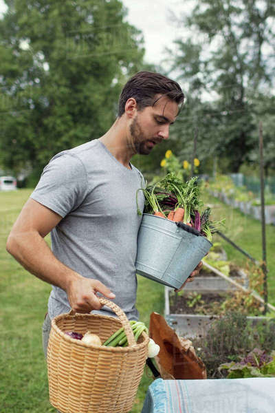 Mid adult man carrying buckets full of freshly harvested vegetables at urban garden Royalty-free stock photo