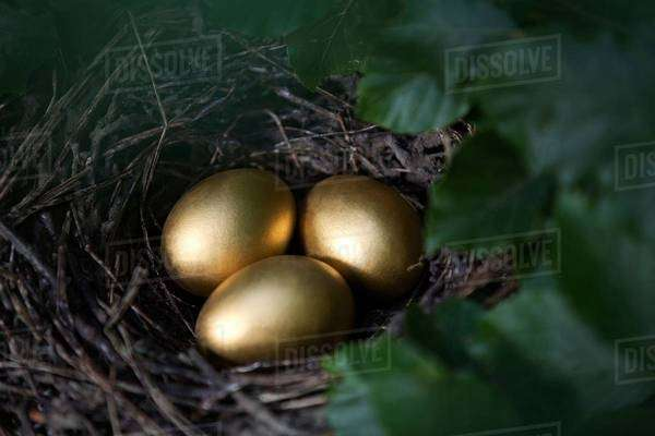 Close up of three golden eggs in birds nest Royalty-free stock photo