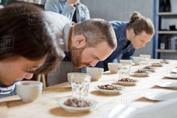 Coffee tasters smelling cups of coffee Royalty-free stock photo