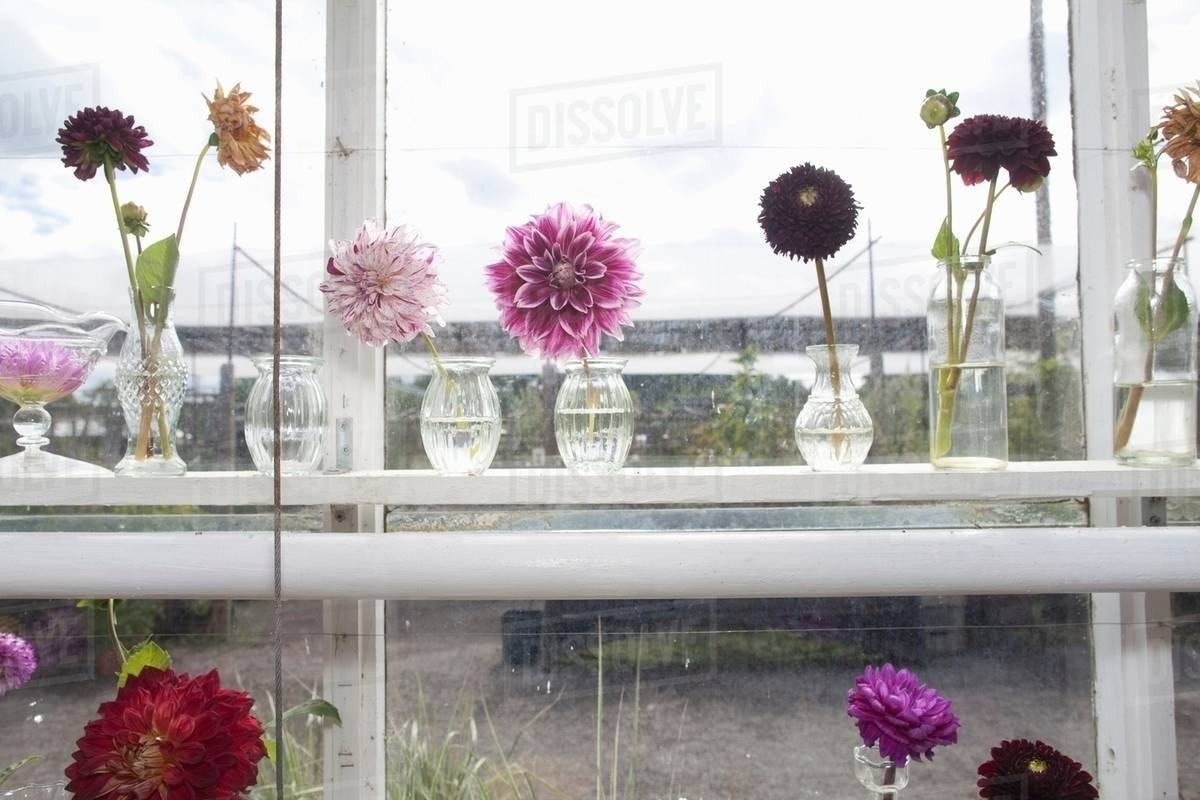 Small vases of purple flowers in window & Small vases of purple flowers in window - Stock Photo - Dissolve