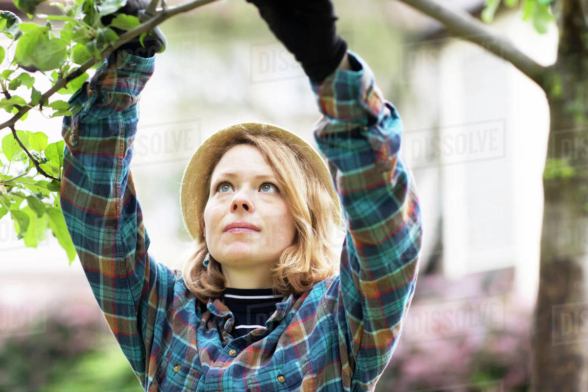 Mid adult woman pruning tree in her garden, shallow focus Royalty-free stock photo