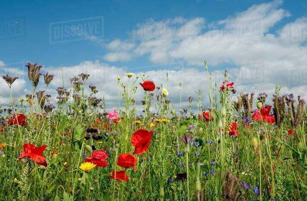 Wild flowers blossoming in summer Royalty-free stock photo