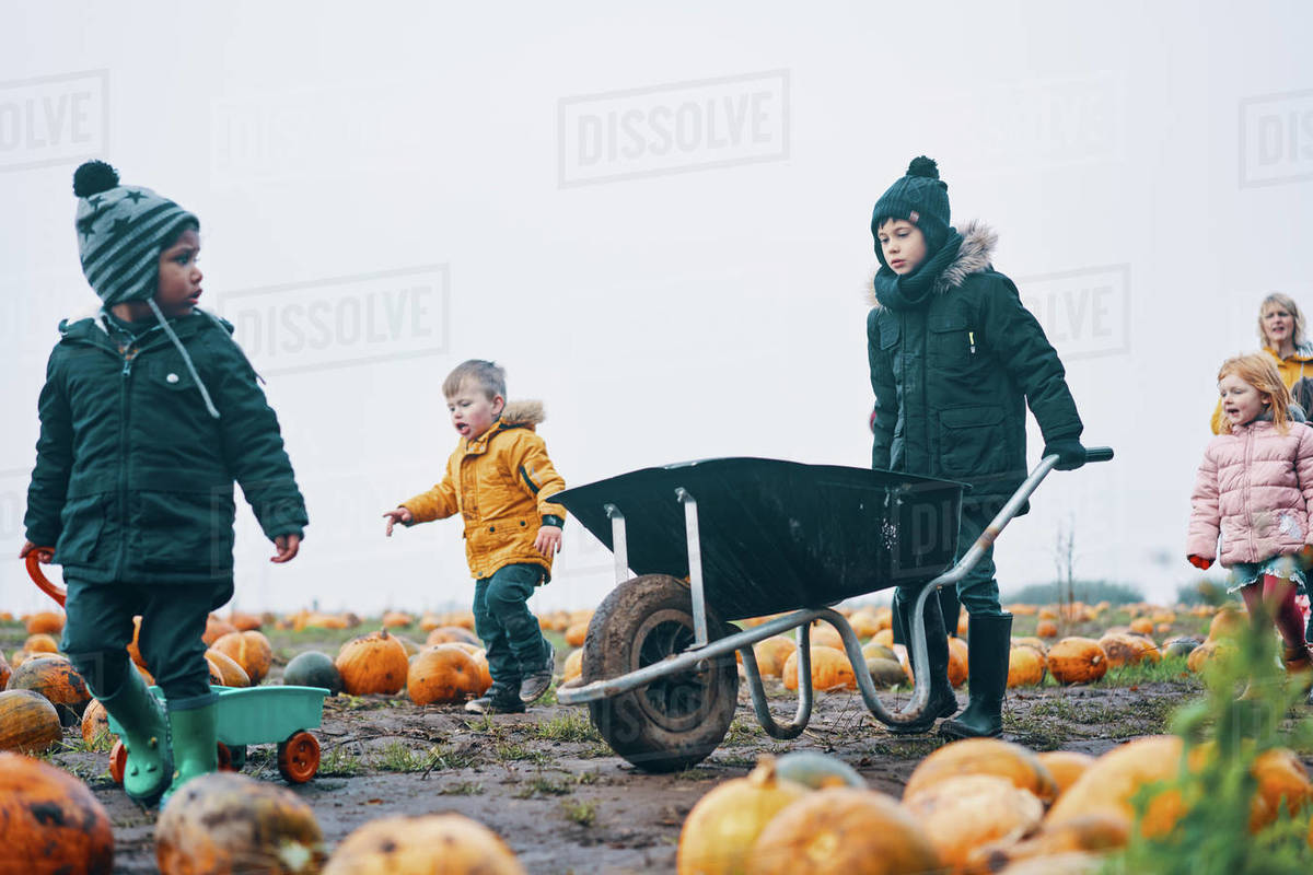 Children and one woman walking through a field of pumpkins pushing a wheelbarrow and pulling a trailer. Royalty-free stock photo