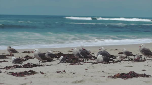 Slow motion shot of seagulls on a beautiful beach in 60 fps Royalty-free stock video