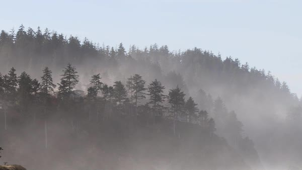 timelapse on Oregon Coast with fog rolling through dense forest trees. Royalty-free stock video
