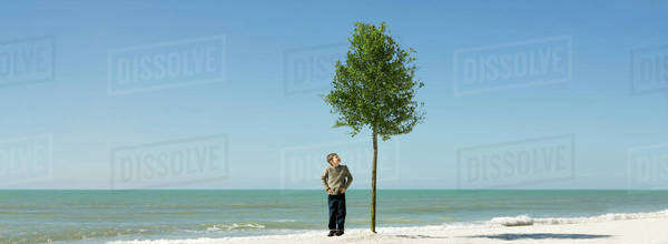 Boy admiring tree growing on beach Royalty-free stock photo