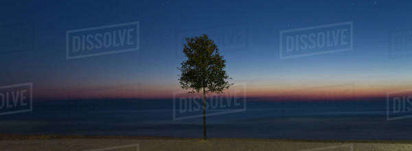Tree on beach at dusk Royalty-free stock photo