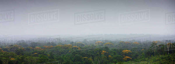 South America, Amazon Rainforest Royalty-free stock photo