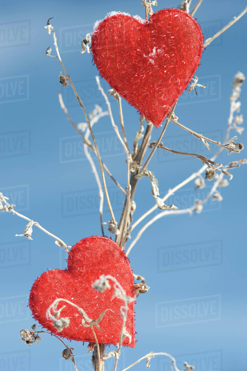 heart shaped ornaments on dried plant stalk stock photo dissolve