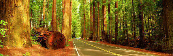 Rural road in redwood forest Royalty-free stock photo