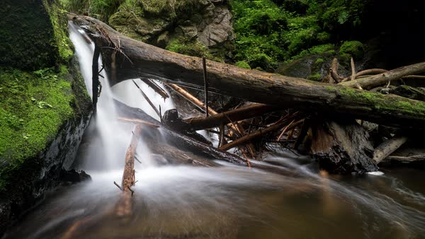 Scenic view of a stream flowing among mossy rocks and a log in forest Royalty-free stock video