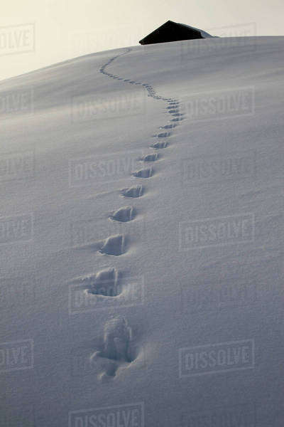 Footprints leading up to cabin Royalty-free stock photo