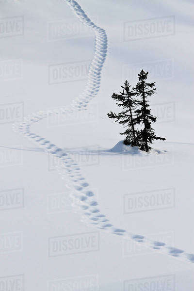 Footstep trail on snow Royalty-free stock photo
