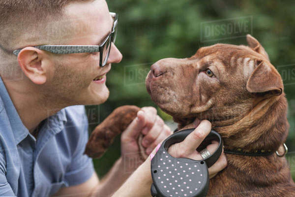 A young man smiling at his Staffordshire Terrier/Shar-Pei dog, close-up Royalty-free stock photo