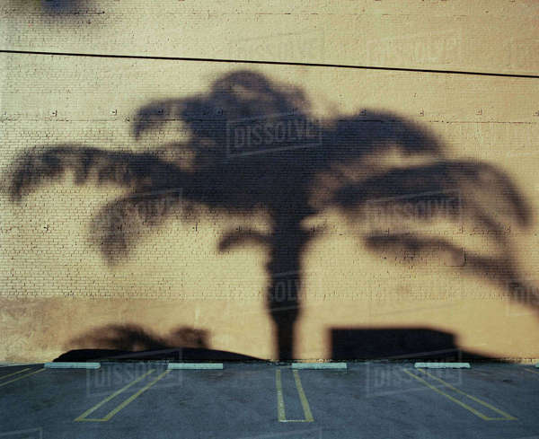 Shadow of palm tree on wall in parking lot Royalty-free stock photo