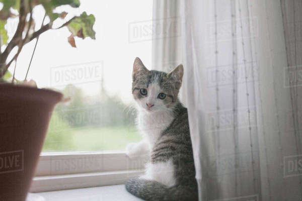 Portrait of cat sitting on window sill Royalty-free stock photo