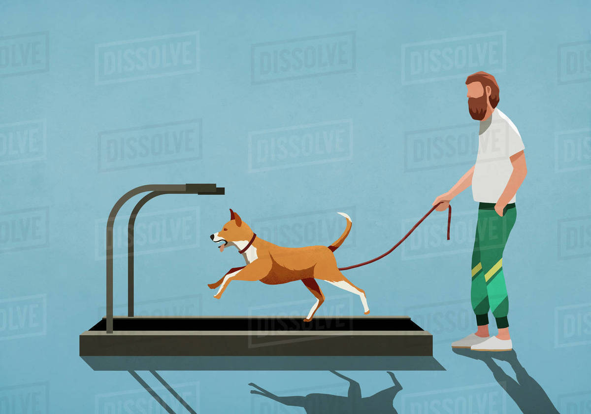 Man with leash watching dog running on treadmill Royalty-free stock photo