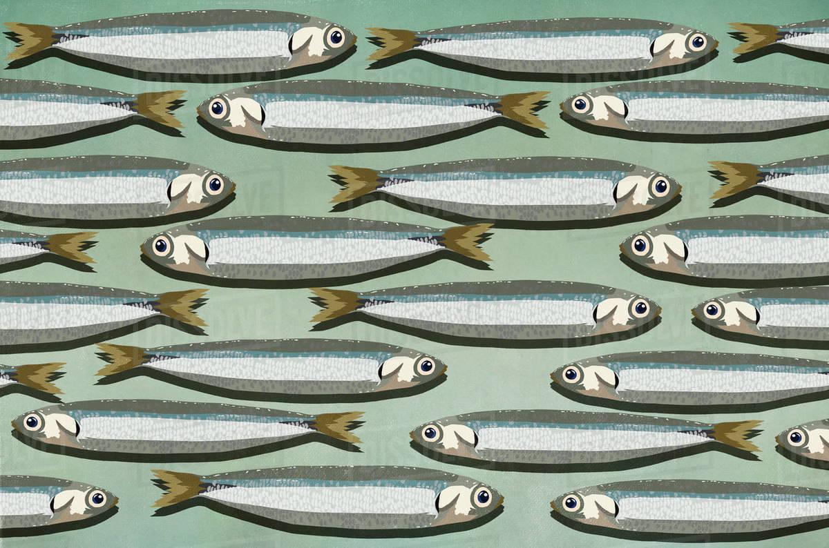 Sardines background Royalty-free stock photo