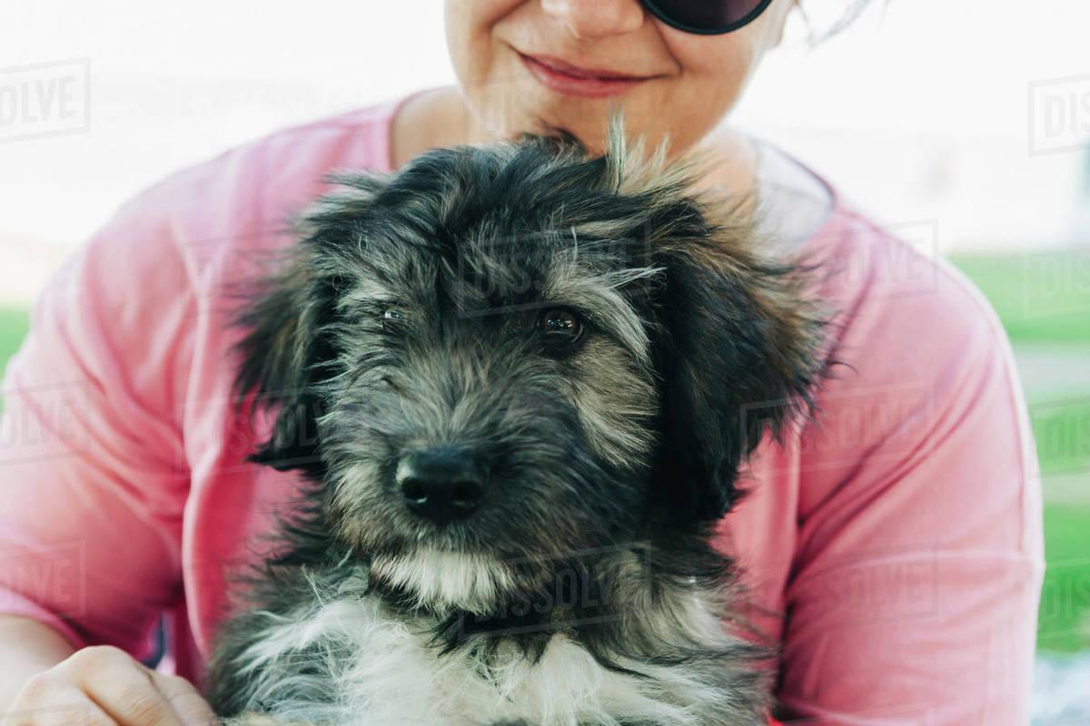 Close up woman holding cute Barbado da Terceira puppy Royalty-free stock photo