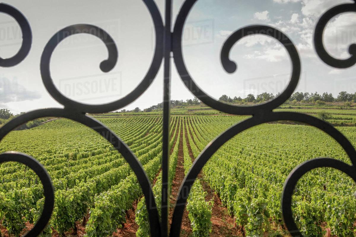 Scenic vineyard view behind scroll railing, Beaune, Burgundy, France Royalty-free stock photo